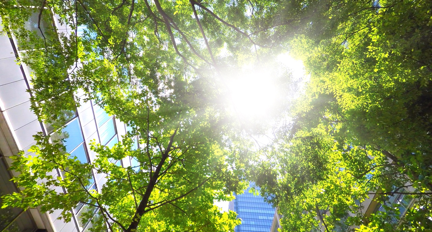 Why going green is good for the world and your business